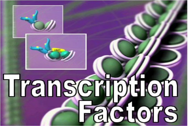 logo Transcription Factors