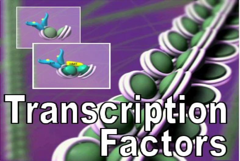 logo Transcription Factors