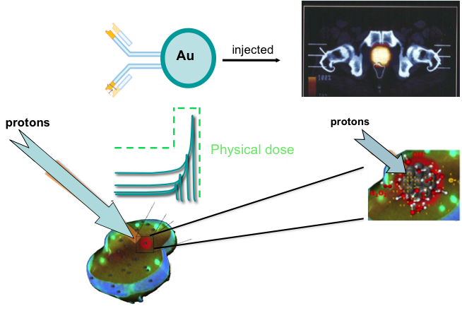 Targeted nanoparticles